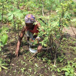 Przygotowanie pola pod uprawę, zasiew i zbiór plonów Lubumbashi Ruch Maitri Adopcja Serca 01