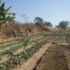 Przygotowanie pola pod uprawę, zasiew i zbiór plonów Lubumbashi Ruch Maitri Adopcja Serca 02